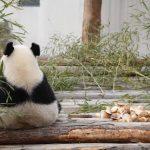 【心理テスト】動物園でどんなパンダが見たい? 「おすすめのリラックス法」